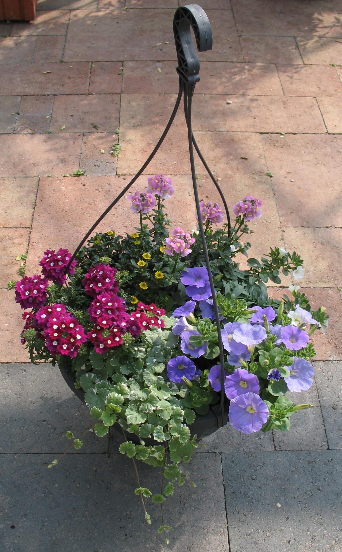Voorbeeld workshop hanging basket | Perkplantenkwekerij ...